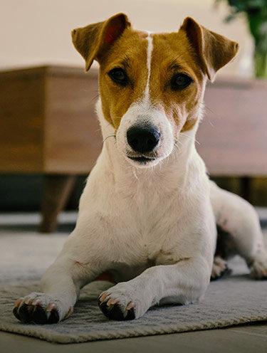 Fragen & Antworten zur Hundeversicherung