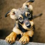 Wenn es Rocky einmal schlechte geht! Die Hunde OP Versicherung unterstützt Sie in diesen Zeiten.