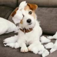 Da wird beinahe jeder Schaden übernehmen, dank einer guten Hundehaftpflicht.