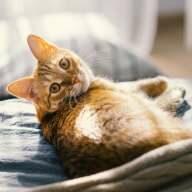 Mit einer Katzenversicherung wird Ihnen im Ernstfall bestmöglich geholfen.