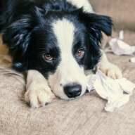 Die Fellnase macht gerne Dinge kaputt? Eine Tierhalterhaftpflicht schafft mehr finanzielle Sicherheit!