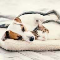Dem Hund gehts schlecht, die Katze muss zum Tierarzt? Kostensicherheit schafft eine Tierkrankenversicherung!