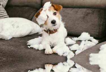 Falls die Couch vom besten Freund einmal zerfetzt werden sollte, steht Ihnen die Hundehaftpflichtversicherung zur Seite.
