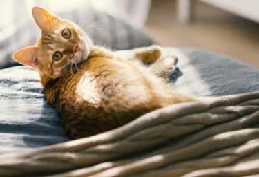 Dem Fellknäuel zur Liebe, die Katzenversicherung für alle Fälle!