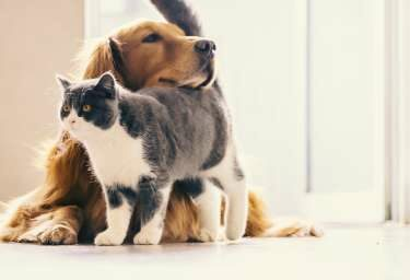 Damit es den Fellnasen auch in schwierigen Situationen gut geht. Jetzt Tierversicherungen abschließen.