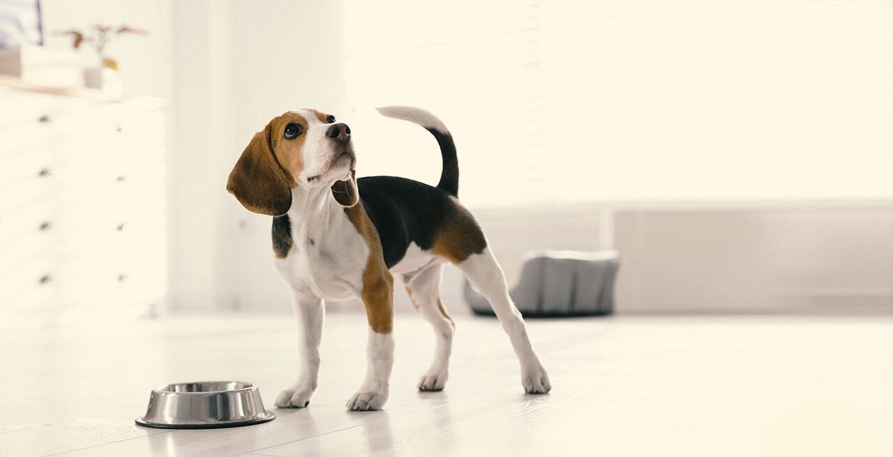Hat der Hund Durchfall, macht man sich als Besitzer schnell sorgen. Wir liefern Ideen für die Lösung.