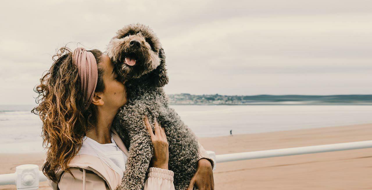 Wie hoch ist die Hundesteuer in welchem Bundesland? Eine wichtige Frage, schon vor dem Hundekauf.