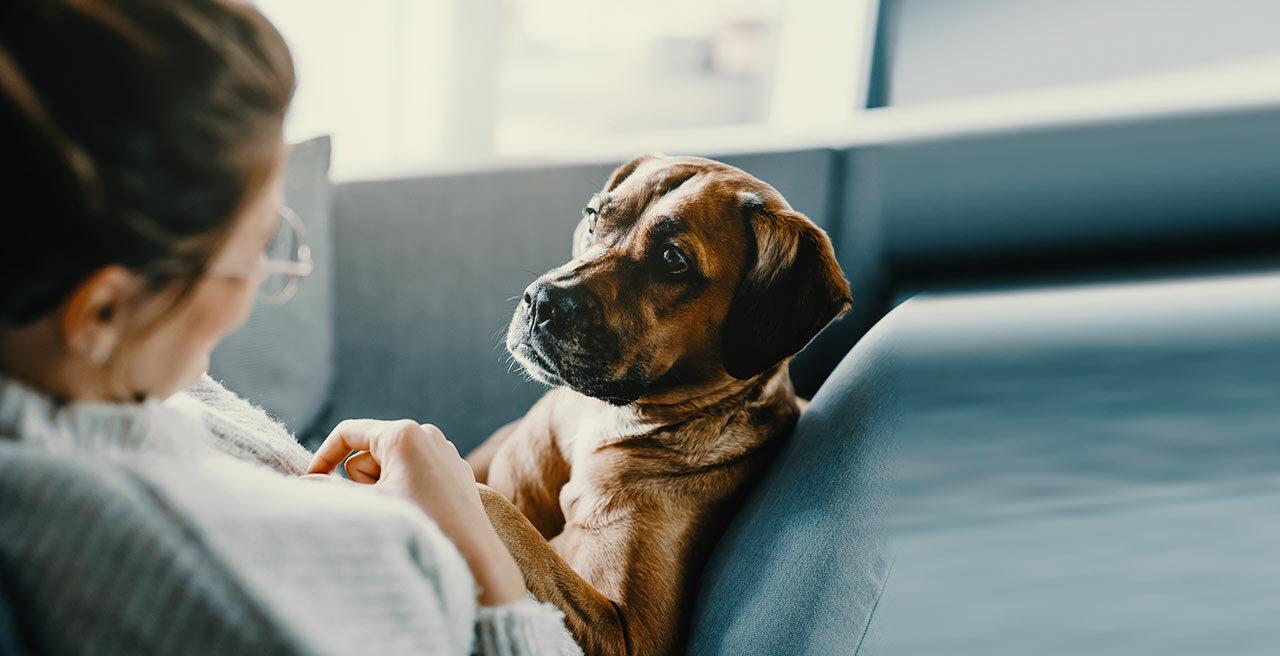 Leishmaniose behandeln, vorbeugen und das Leben des Hundes verbessern mit der Krankheit. Tipps und Ideen finden Sie hier.