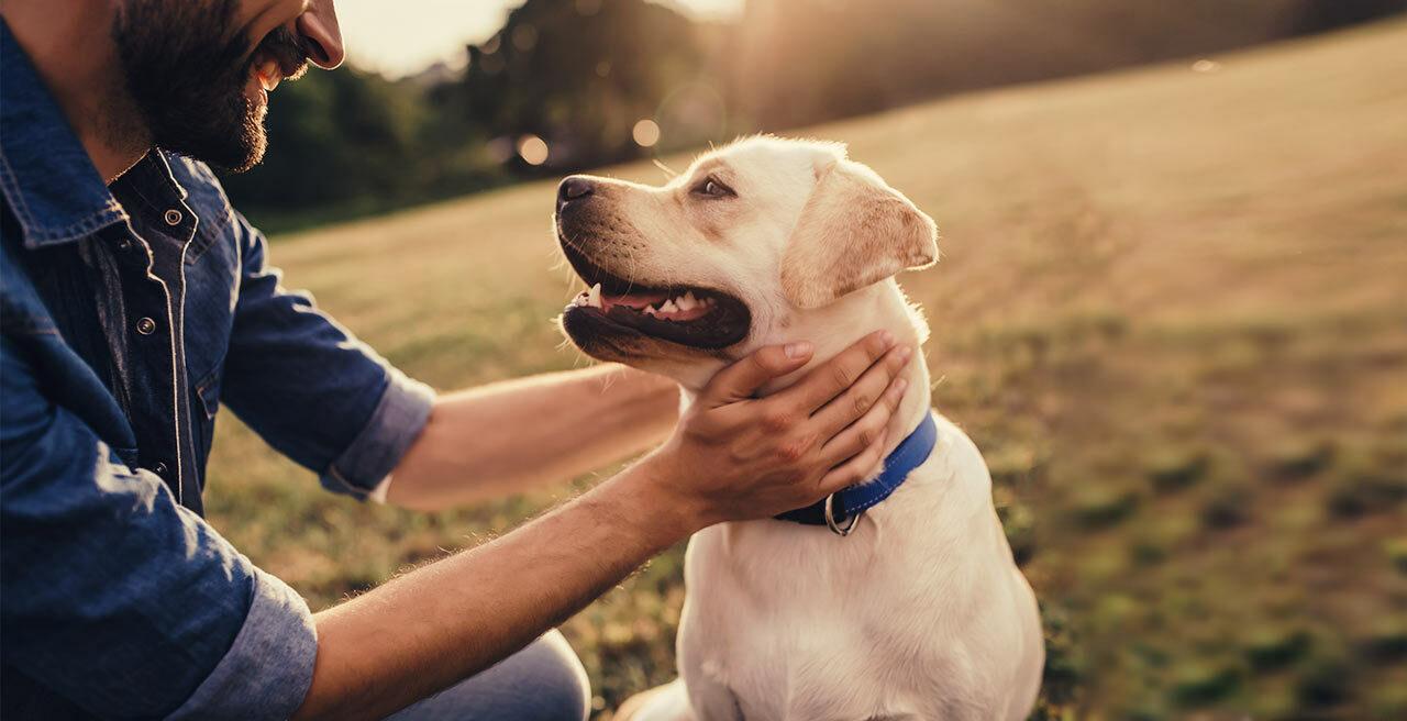 Ein Hund kostet nicht nur Liebe und Hingabe, sondern auch jede Menge Geld und das nicht nur beim Kauf. Welche Kosten auf Sie zukommen erfahren Sie hier.