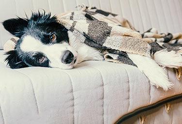 Giardien beim Hund sind anstrengend, quälend und ansteckend, für Hund und Mensch. Wir bieten Lösungsvorschläge und Anreize zur Prävention.